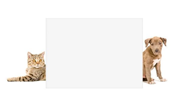 Cat scottish straight and puppy pit bull peeking from behind placard picture id1153903255?b=1&k=6&m=1153903255&s=612x612&w=0&h=gmfxtsoclkxy onavzertpwxdlp0kuaxfxypufog j8=