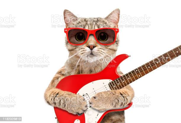 Cat scottish straight in sunglasses with electric guitar isolated on picture id1132025813?b=1&k=6&m=1132025813&s=612x612&h=5nadvxsmhneo6 mrxurz6ts9qhrnrywhchz3lpksavu=