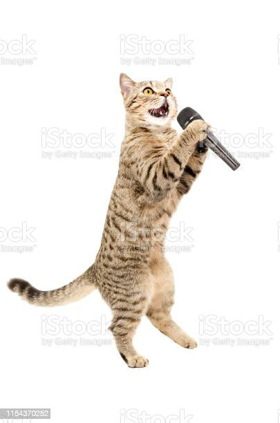 Cat scottish straight standing on hind legs with microphone picture id1154370252?b=1&k=6&m=1154370252&s=612x612&h=ixyd 8hpik6 tpsl9dn1iis2ma1lnco5gaun3srhgxo=