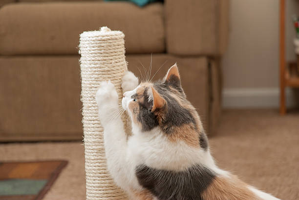 cat scratching closeup - sisal stock pictures, royalty-free photos & images