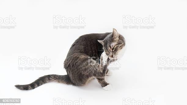 Cat scratching its head picture id626253252?b=1&k=6&m=626253252&s=612x612&h=u9rul1qmedndnpseae anjuwsi fttpmosafdbuxxty=