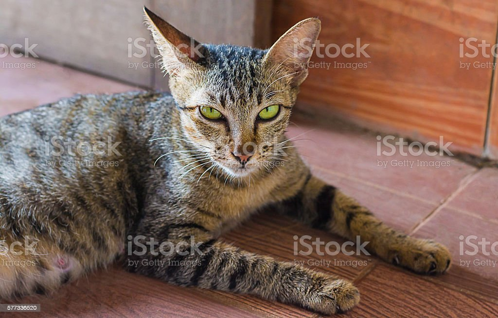 cat see eye contact stock photo