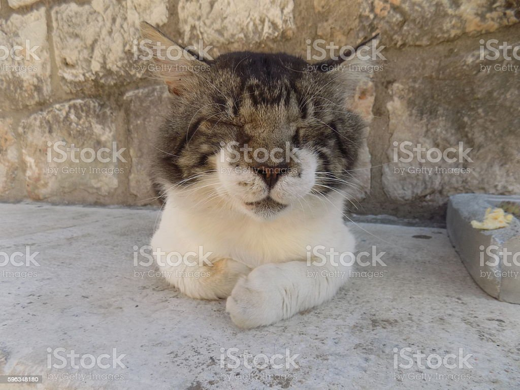 Cat seeping royalty-free stock photo
