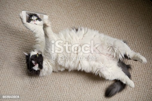 istock Cat Selfie 653943928