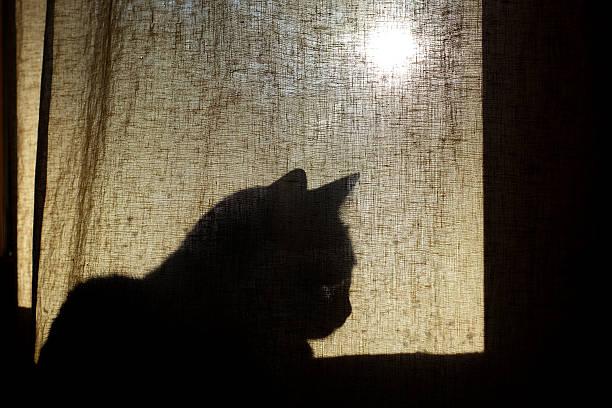 Cat shadow on curtain picture id601367578?b=1&k=6&m=601367578&s=612x612&w=0&h=ehocyodqx74xvdi3fql8uhfhw7 xhoyrdrchrn3xvra=