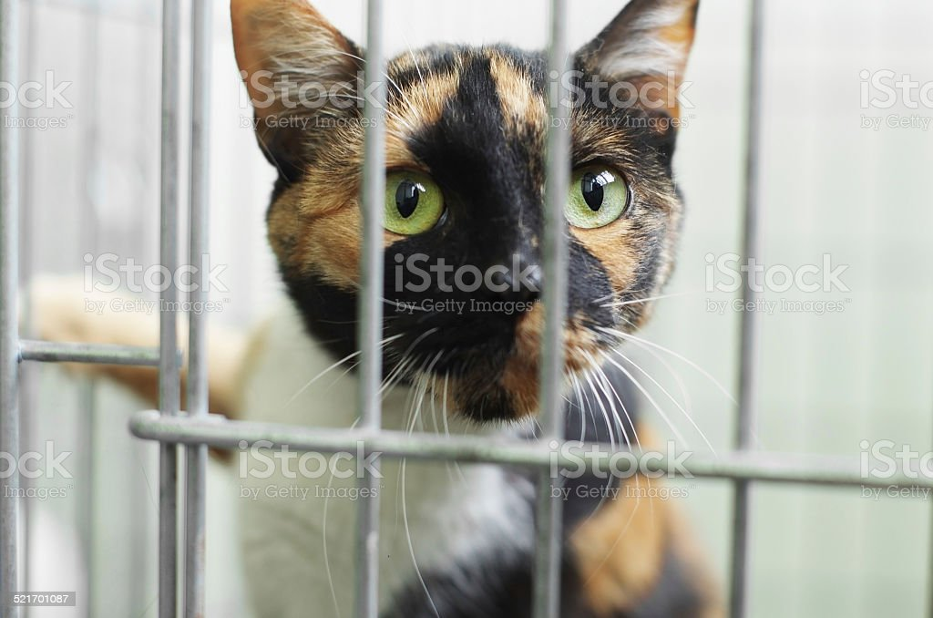 cat shelter stock photo