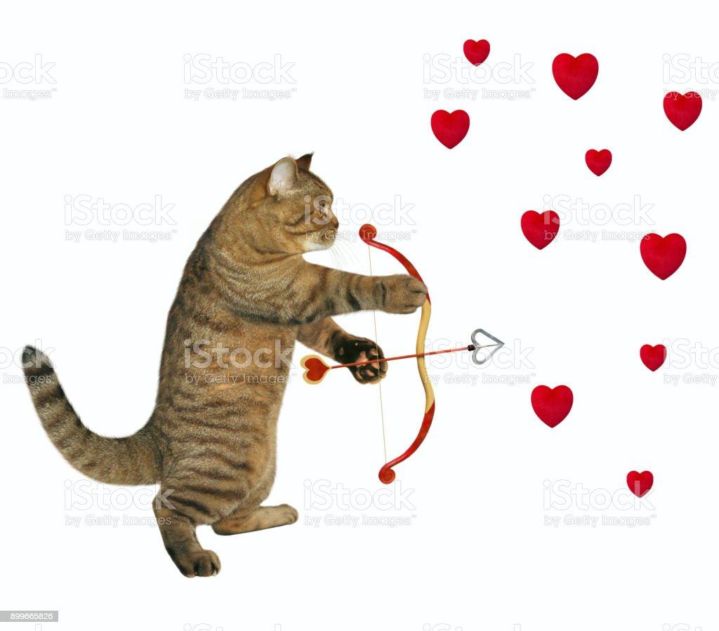 Cat shoots with an arrow stock photo