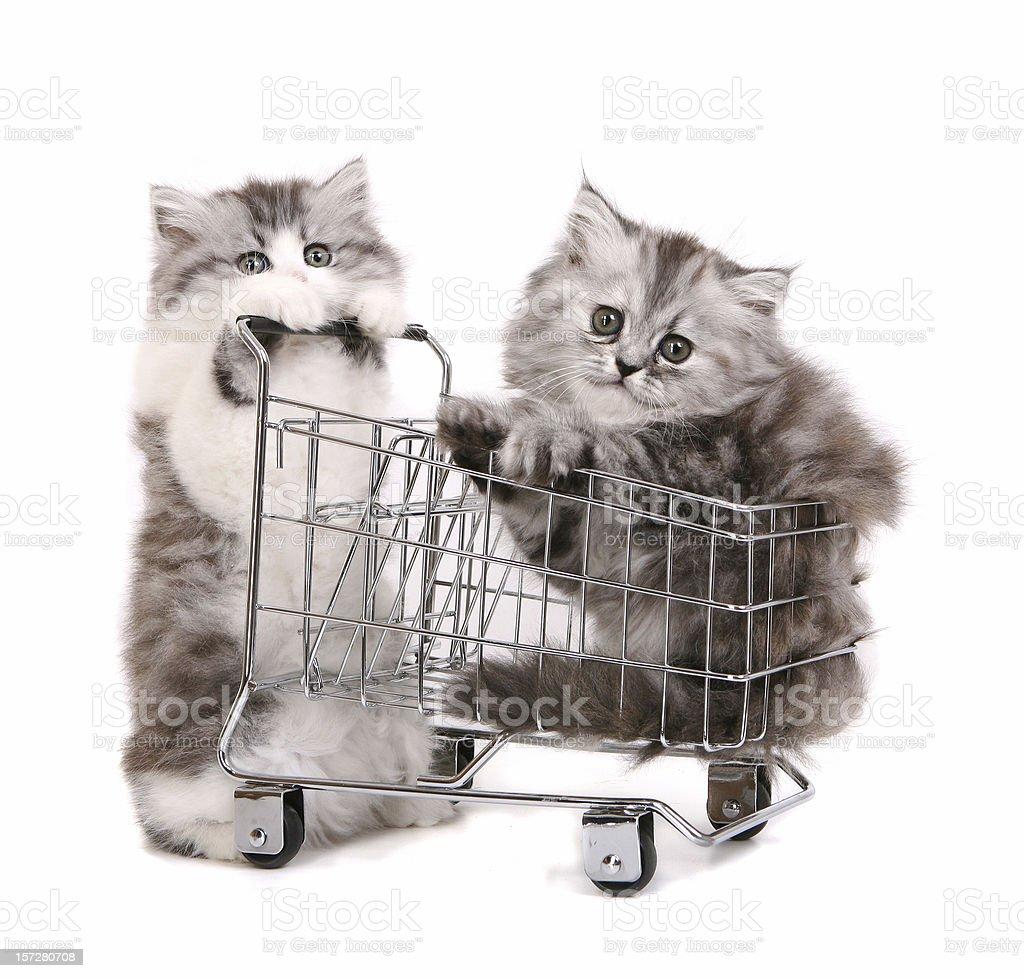 Katze Shopping – Foto