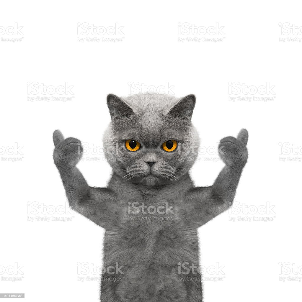 cat showing thumb up and welcomes -- Isolate on white stock photo