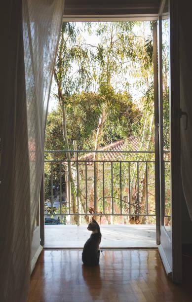 Cat silhouette in front of the balcony picture id959227154?b=1&k=6&m=959227154&s=612x612&w=0&h=xymcmnzhfzo1ewwz jgpkdyoqvzkemdn0uhqoqls8s0=