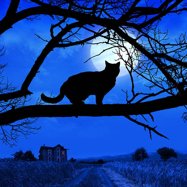 Cat silhouette picture id94172307?b=1&k=6&m=94172307&s=612x612&w=0&h=wekusgoe2s4917rneifx95prvovhhamiobn05kelwho=