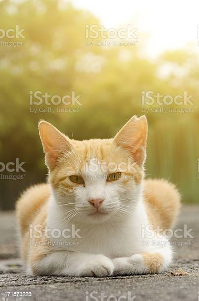 Cat sit on ground and looking at you picture id171573223?b=1&k=6&m=171573223&s=612x612&h=nx3jtowrd5i0wwjq9ibpgqd5 hcp1kfyfmma6bjrfto=