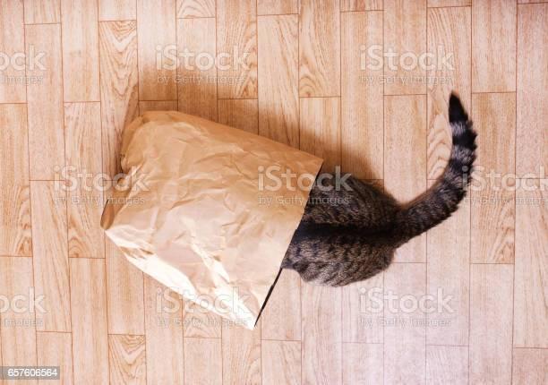Cat sits hid in a paper craft package picture id657606564?b=1&k=6&m=657606564&s=612x612&h=iaozjowjv3k apxqh2 bj8f3zgx qygzvmmrqb7dtsg=