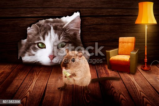 495695633 istock photo Cat sits in front of the mouse hole and observes the mouse 831383356