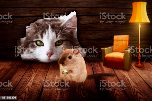Cat sits in front of the mouse hole and observes the mouse picture id831383356?b=1&k=6&m=831383356&s=612x612&h=oydamsw3phl1gzuimrkybrwwt7d5cjwslukmgcf3xvy=