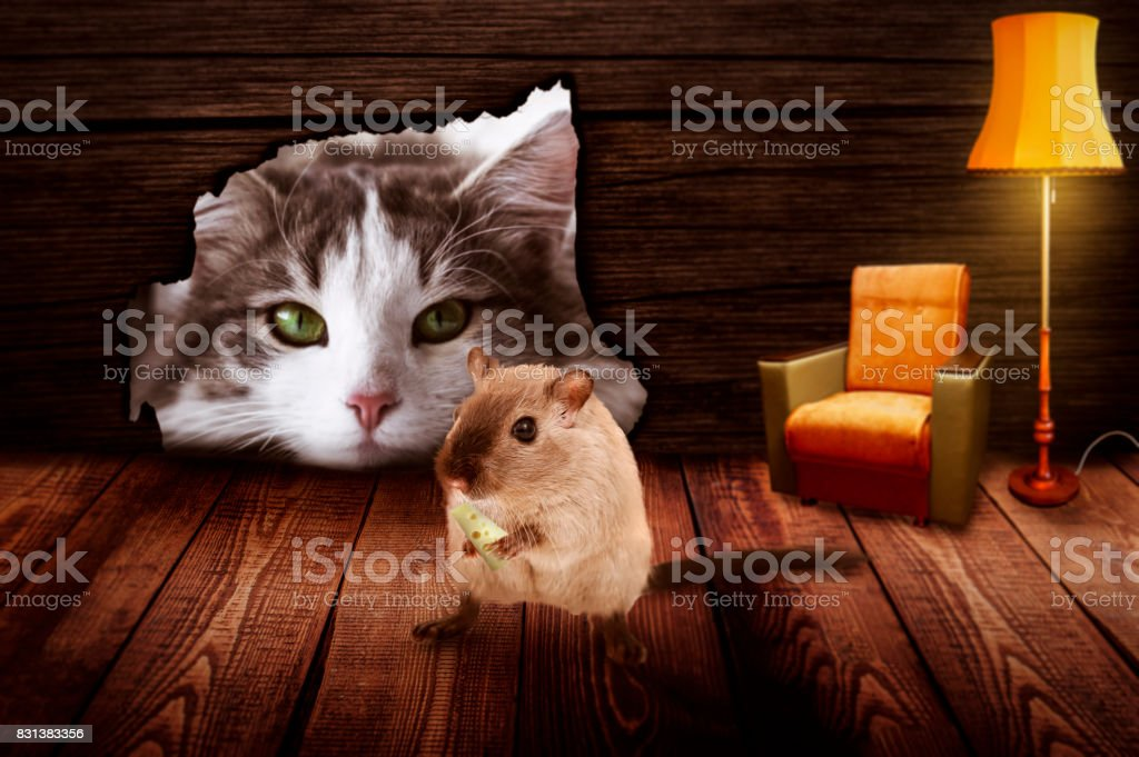 Cat sits in front of the mouse hole and observes the mouse stock photo