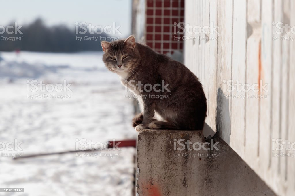 cat sits on a concrete platform of a multi-storey building in the winter on the street stock photo