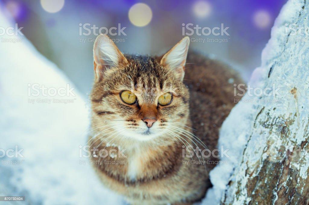 Katze sitzt auf einem schneebedeckten Baum im winter – Foto