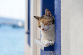 A cat sits on a windowsill near sea in the resort town of Bodrum, Turkey. Close up