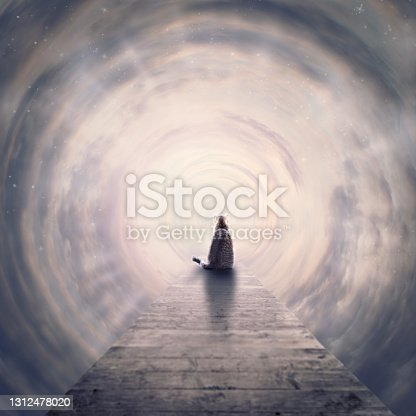 istock cat sits on end of footbridge in tunnel of clouds to the light 1312478020