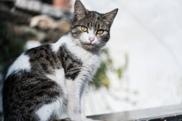 Katze sitzend und mit Blick auf die Kamera – Foto