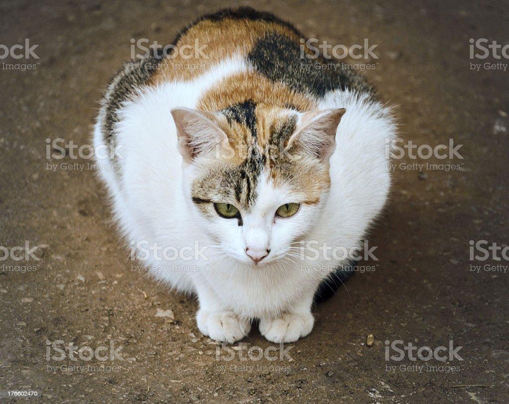 Cat sitting and waiting stock photo