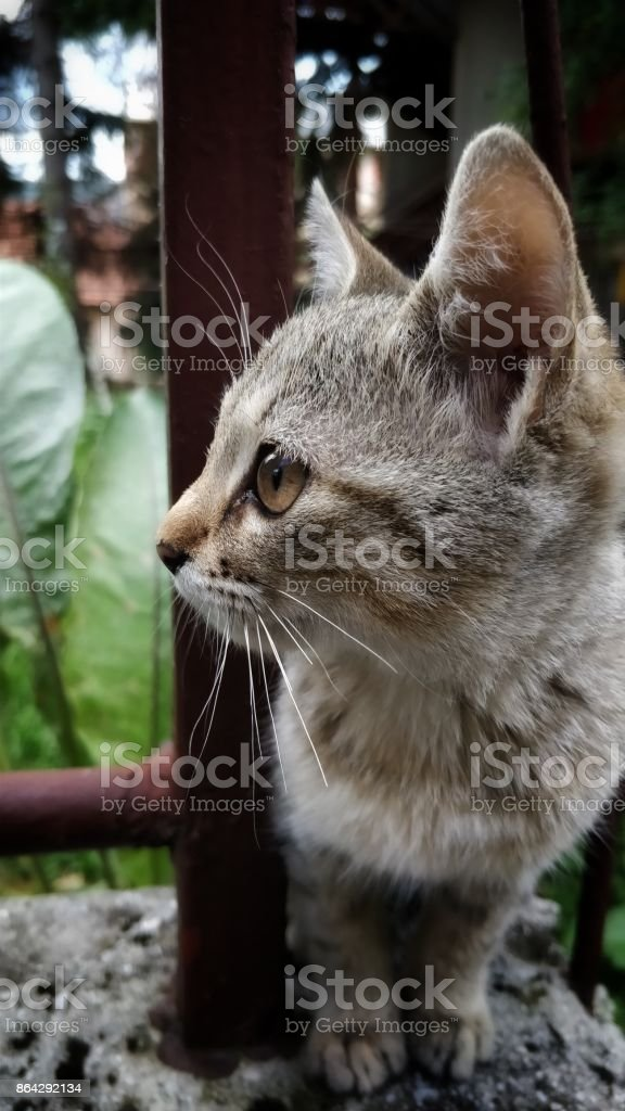 Cat sitting and waiting royalty-free stock photo