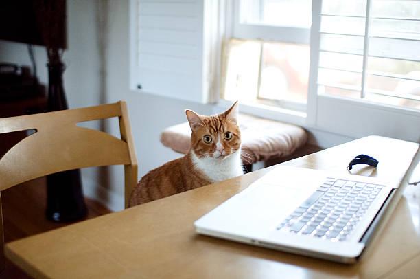 Cat sitting at kitchen table picture id523706147?b=1&k=6&m=523706147&s=612x612&w=0&h=lkzayorqy92vabhz2dxecc8c3g5b2pofkxy4sx0mspg=