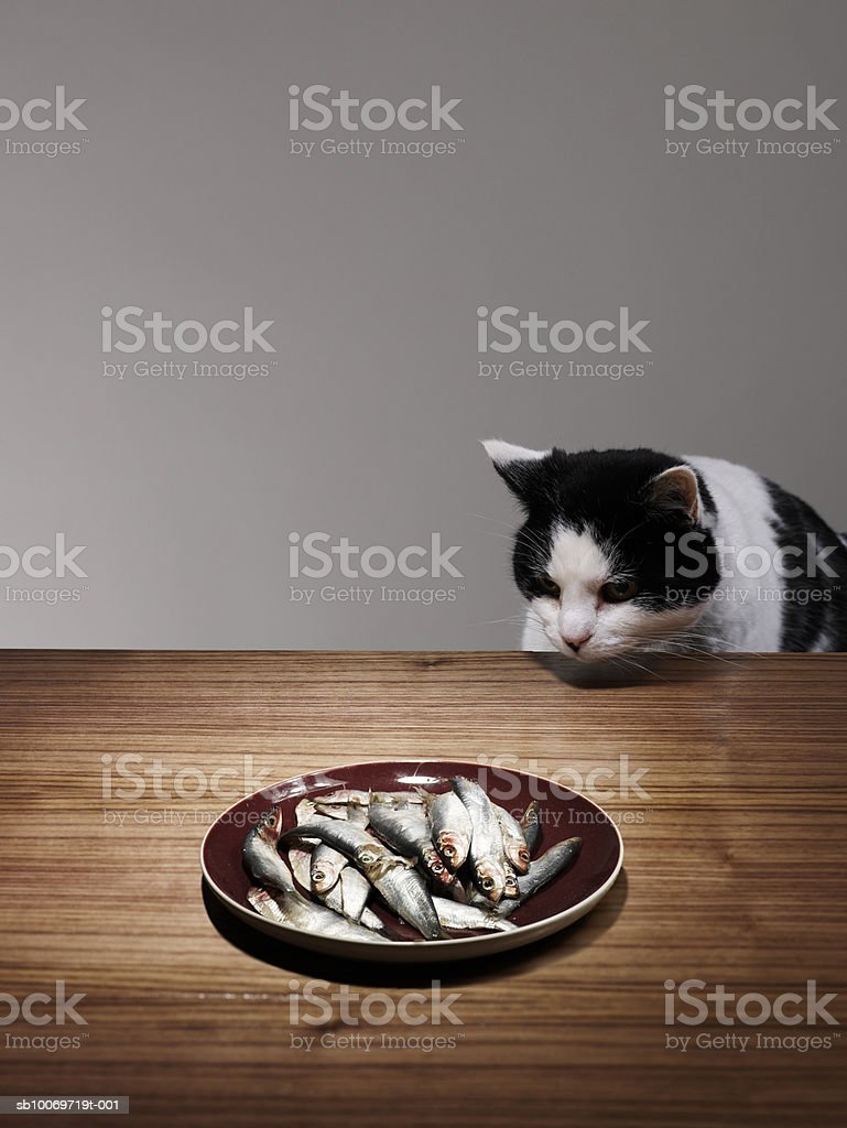 Cat sitting at table looking at fishes in plate royalty-free stock photo