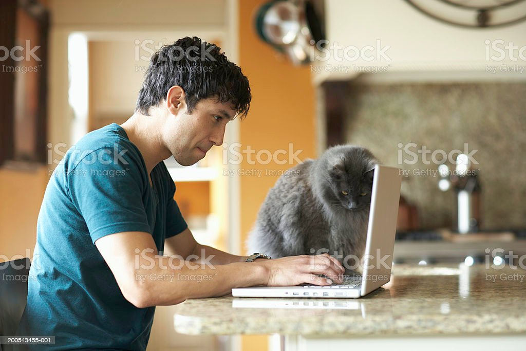 Cat sitting beside man using laptop in domestic kitchen, side view stock photo