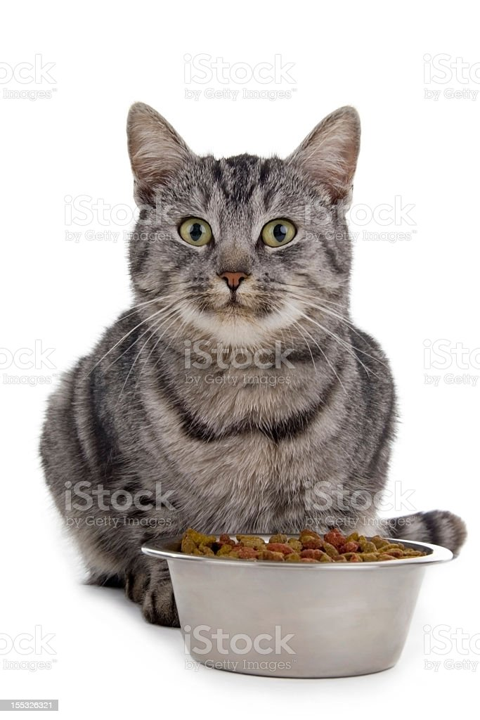 A cat sitting by its bowl of food stock photo