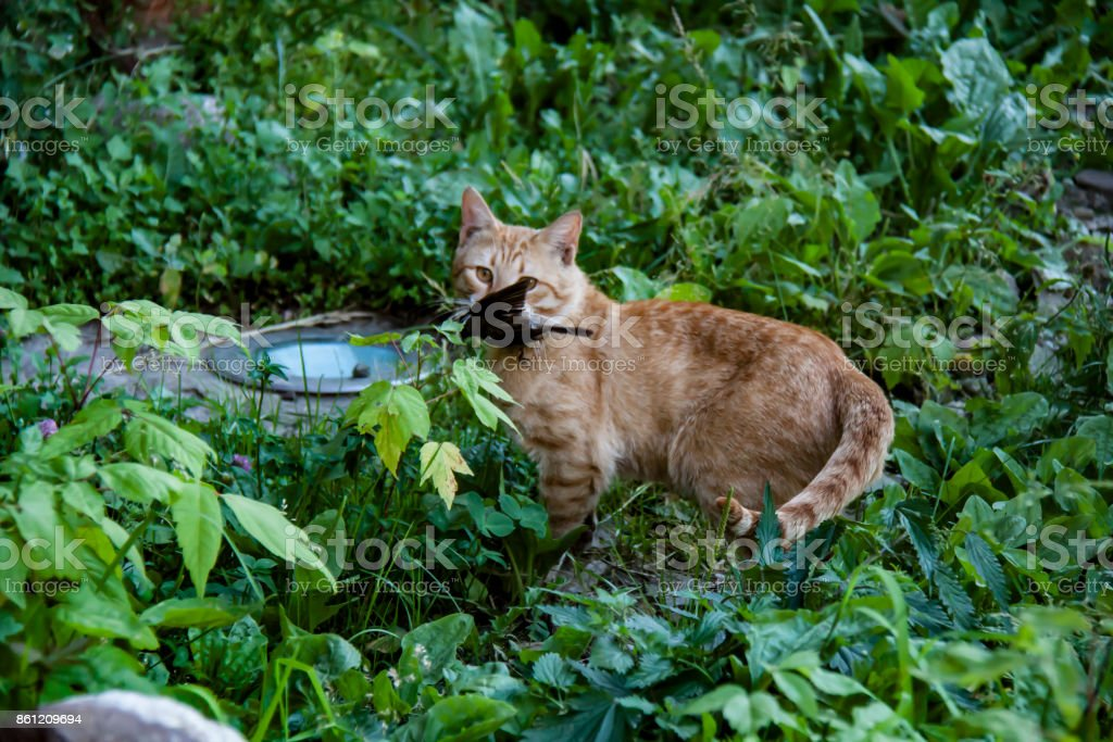 Cat sitting hunting catched a bird stock photo
