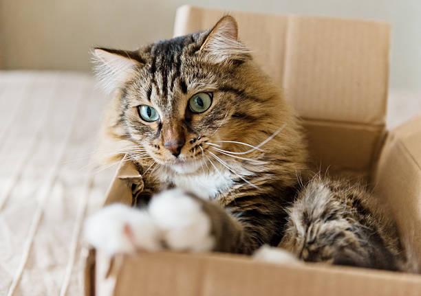 Cat sitting in a cardboard box picture id509316663?b=1&k=6&m=509316663&s=612x612&w=0&h=w70ow9bi6dxd7zhh4kyr5fwgr0h9e9kablnopywmbm8=
