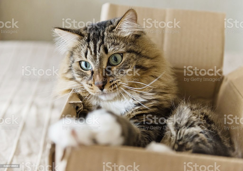 Cat sitting in a cardboard box stock photo