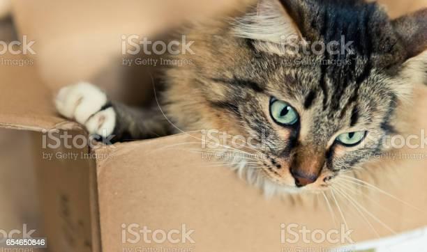 Cat sitting in a cardboard box picture id654650846?b=1&k=6&m=654650846&s=612x612&h=p4vmohgj83fycp3tokp9hghdk8ptky8sqgxgmco9vaq=