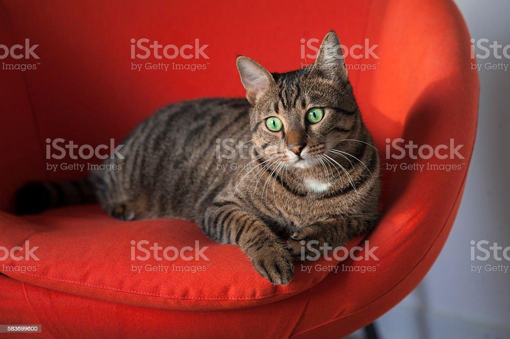 Cat sitting in a chair. – Foto