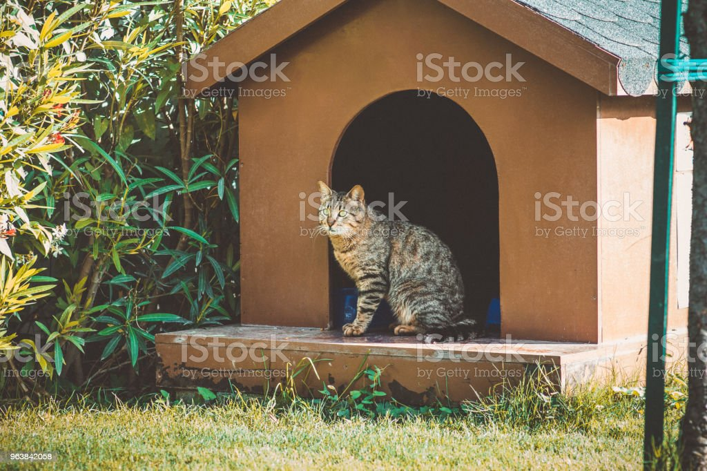 A cat sitting in a doghouse in the garden - Royalty-free Animal Stock Photo