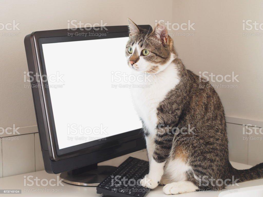 chat assis en face de l'ordinateur photo libre de droits