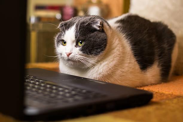Cat sitting in front of laptop picture id638057706?b=1&k=6&m=638057706&s=612x612&w=0&h=kqj6krmp9f2yb6t8rfehozh5fdp8aomf2pphsewozzm=