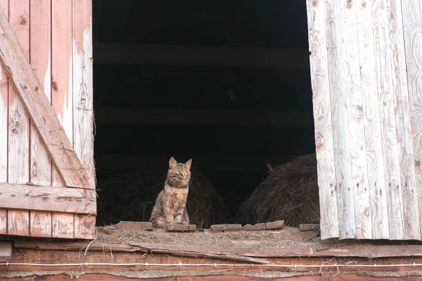 Cat sitting in the attic in the hayloft. stock photo