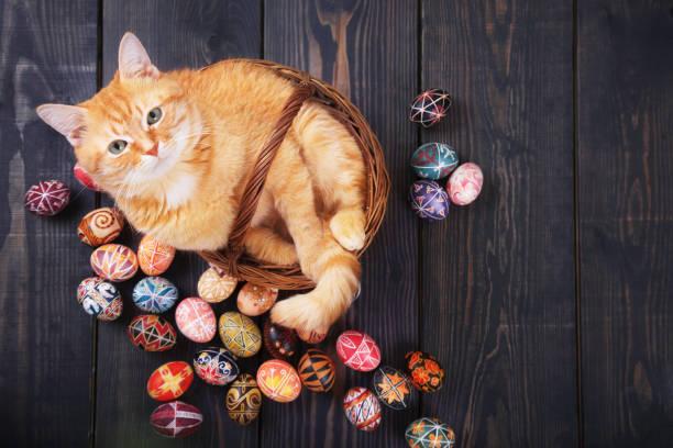 Cat sitting in the basket on a wooden background with easter eggs picture id1133536596?b=1&k=6&m=1133536596&s=612x612&w=0&h=wcwetfhwfnn7ew54ffhwjwwll0leffzeejc1ttrii9w=