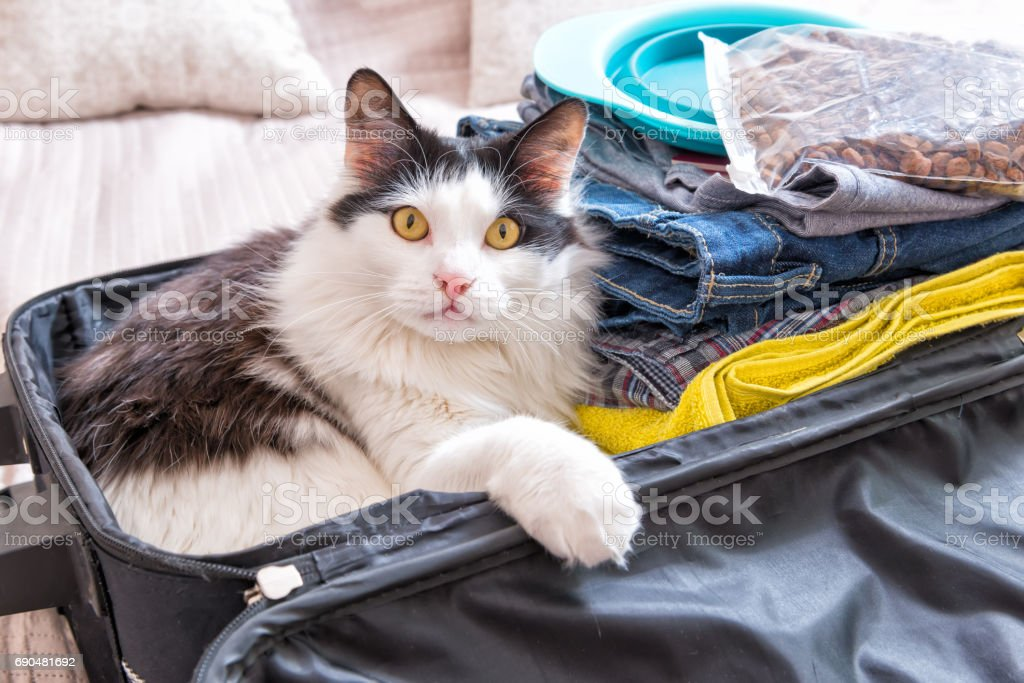 Cat sitting in the suitcase stock photo