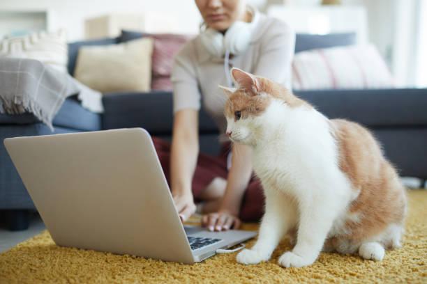 Cat sitting near the owner on the floor picture id1206638082?b=1&k=6&m=1206638082&s=612x612&w=0&h=q4camkvy30q8wfkyiy xlfiztdm65o1euglrdd0k3fk=