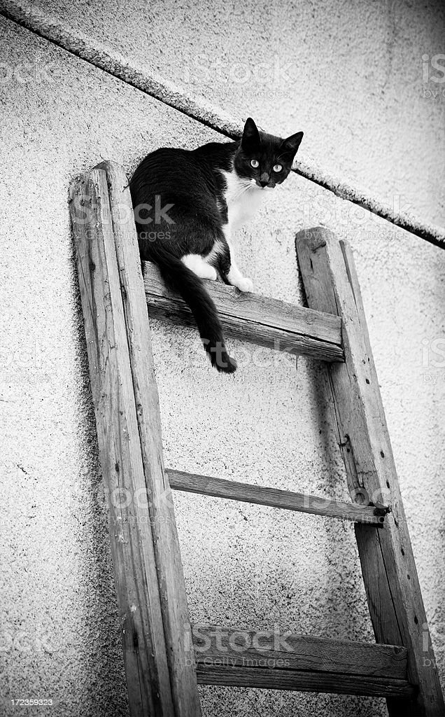 Cat sitting on a ladder royalty-free stock photo