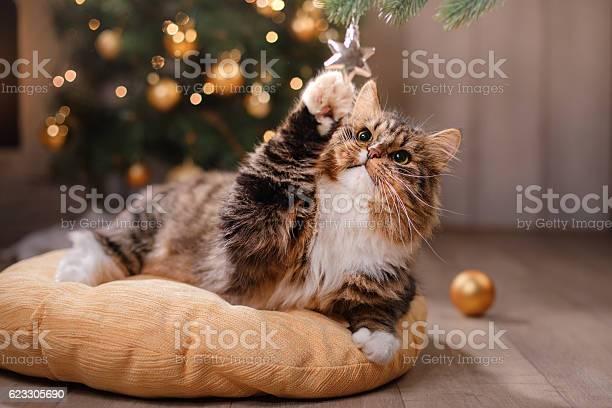 Cat sitting on a pillow picture id623305690?b=1&k=6&m=623305690&s=612x612&h=l6pc3xruo3z8lnqq 6vgpnknyscq4st0cmwjllfuhoy=