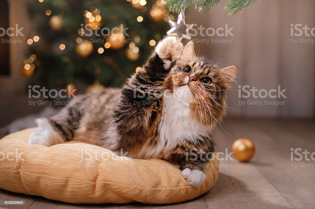Cat sitting on a pillow - foto de stock