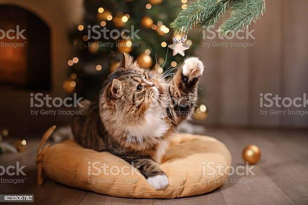 Cat sitting on a pillow picture id623305782?b=1&k=6&m=623305782&s=612x612&h=k0unwvcneoeih uygosrqt v7ynufbwe2hlwyp otje=
