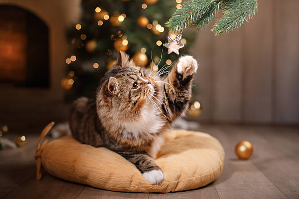 cat sitting on a pillow - katze weihnachten stock-fotos und bilder