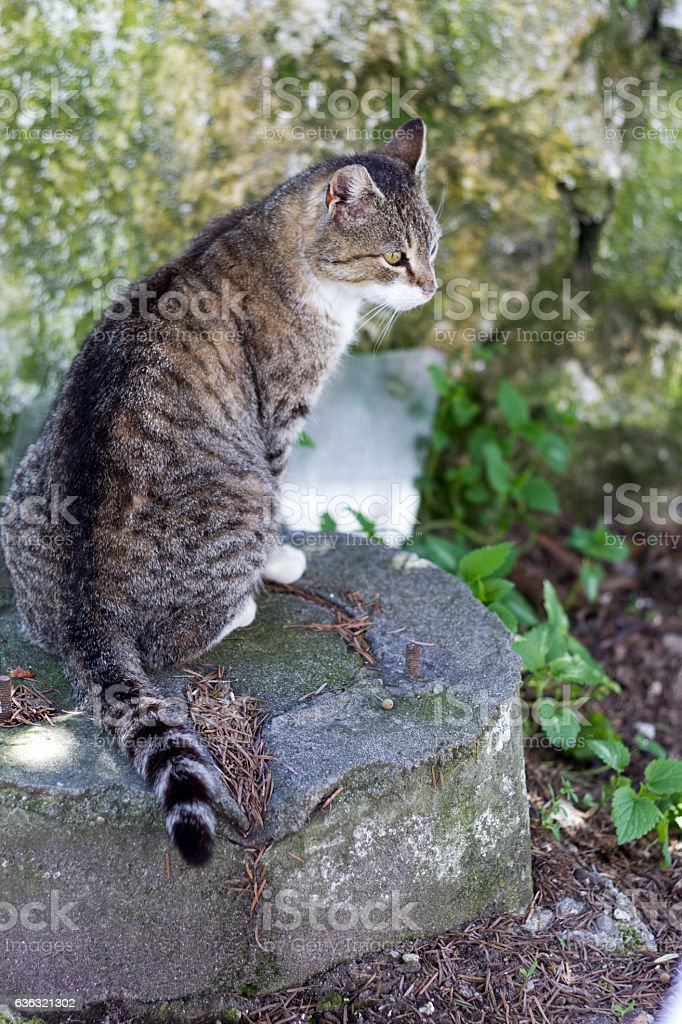 Cat sitting on a rock backwards and watching in forest. stock photo