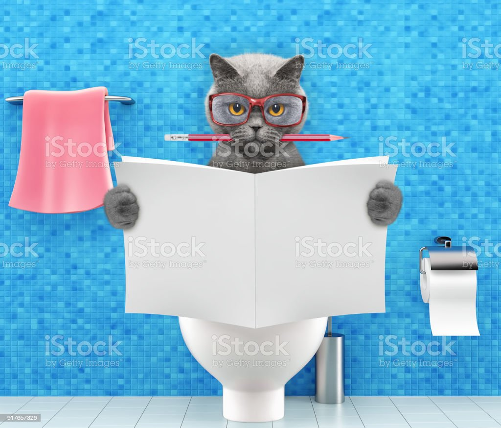 Cat Sitting On A Toilet Seat With Digestion Problems Or Constipation ...